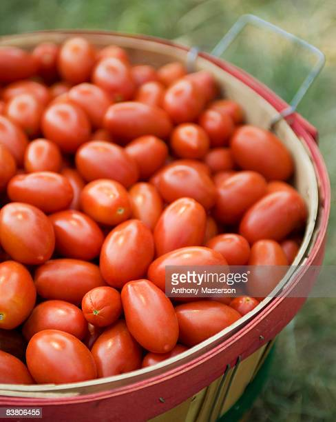 Bushel basket of Roma tomatoes