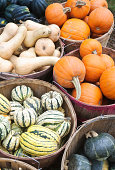 Bushel Baskets of Fall Squash