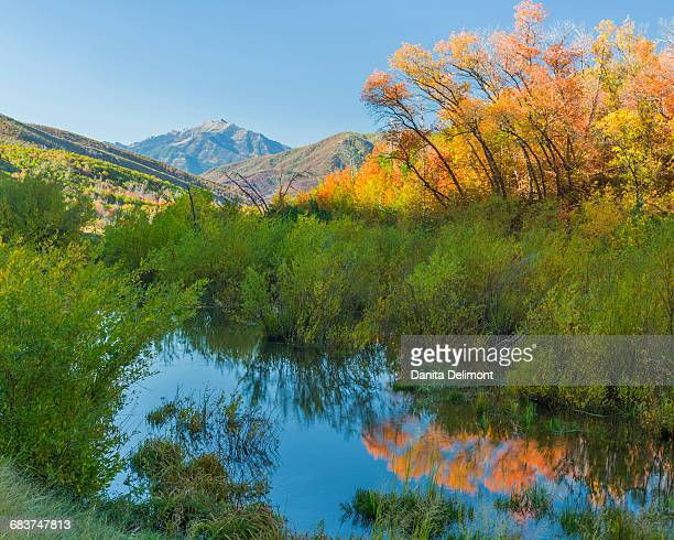 Bushes reflected in stream in Wasatch Cache National Forest, Utah, USA