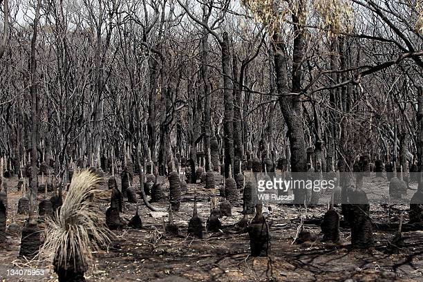 Bushland is burnt on Orchard Ramble following a bush fire on November 25 2011 in Margaret River Australia 4000 hectares of forest and over 30...