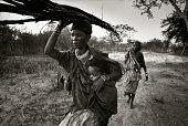 Bushmen Women Carrying Saplings