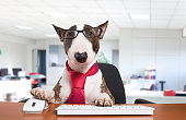 Business dog using his computer in the office
