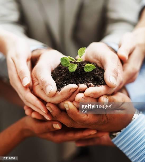 ビジネスの成長率-手緑の植物チームワークを示す