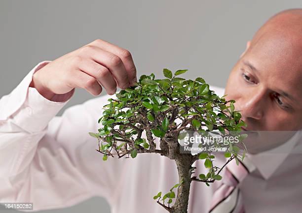 Business man attending to a Bonsai tree