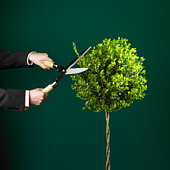 Business man trimming tree with garden shears, view of hands, studio shot