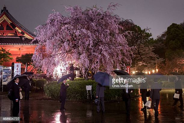 Business men view a cherry blossom tree in full bloom in Ueno Park on April 7 2015 in Tokyo Japan During cherry blossom season thousands of people...