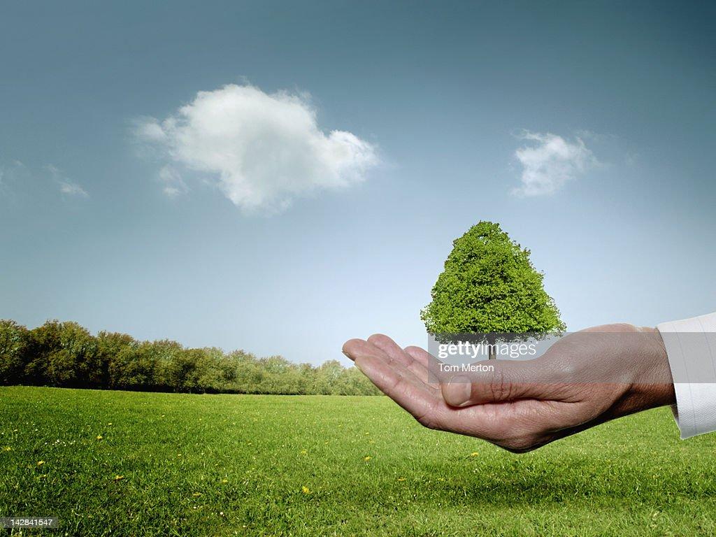 Businessman cupping hand around tree : Photo