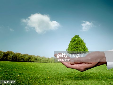 Businessman cupping hand around tree