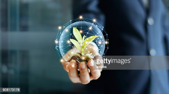 Businessman hand with coins and sprout in network connection. Plant growing on pile of coins money. Money growth concept. : Foto de stock