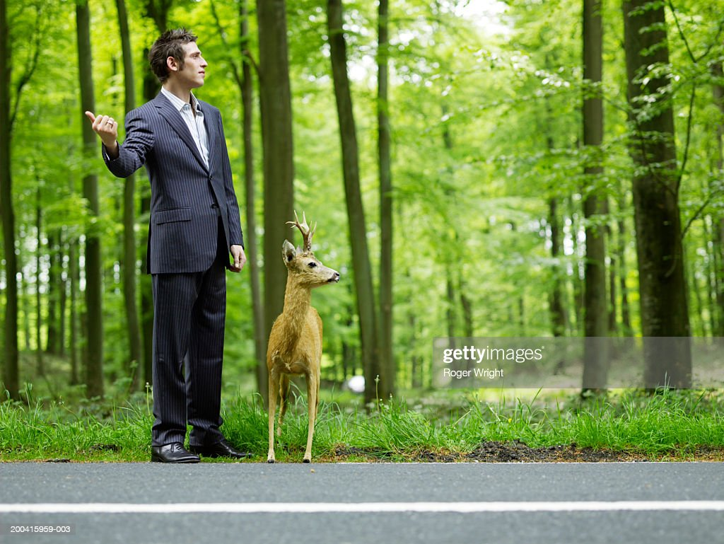 Businessman hitchhiking on country road by stuffed deer