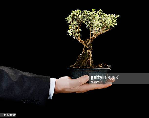 Businessman holding bonsai tree