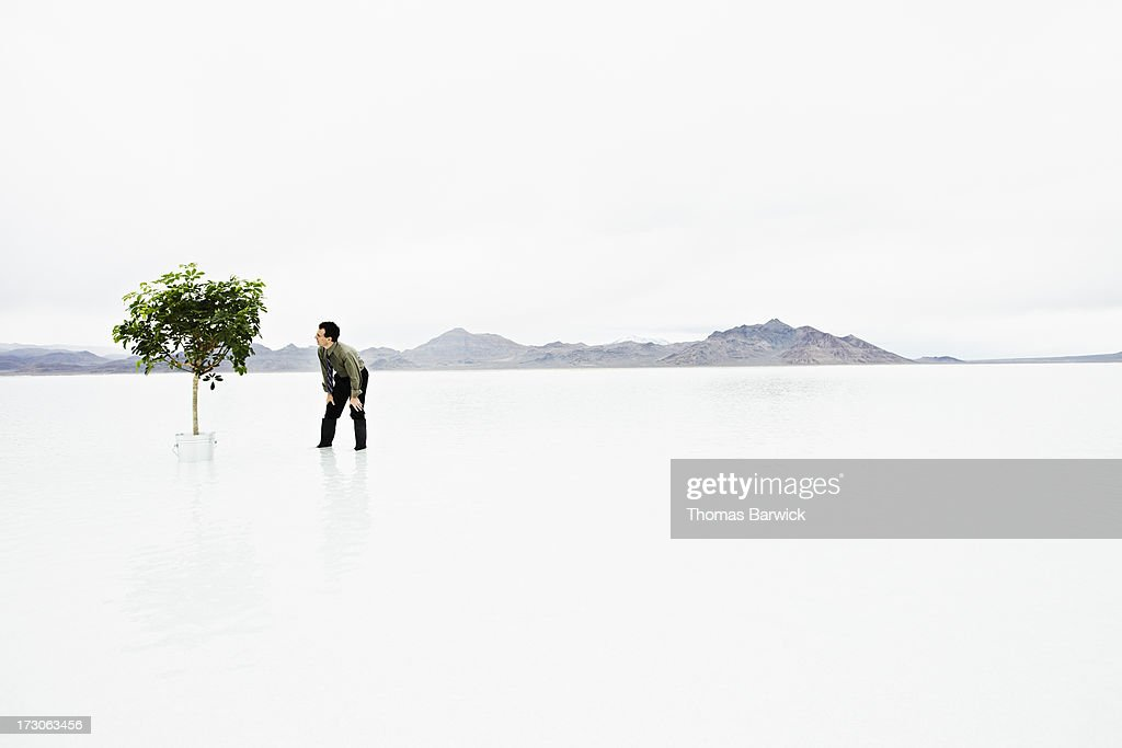 Businessman in water looking at potted tree : Foto de stock