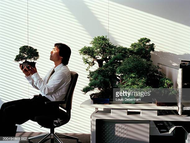 bonsai tree for office. beautiful bonsai businessman looking at bonsai tree in office inside bonsai tree for office