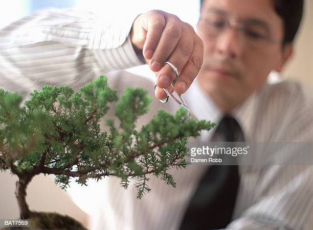 Businessman pruning bonsai tree, focus on tree in foreground