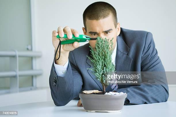 Businessman pruning bonsai tree