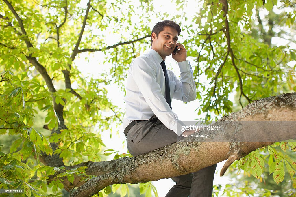 Businessman sitting in tree talking on cell phone : Stock Photo