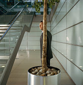 Businessman standing behind potted tree, indoors