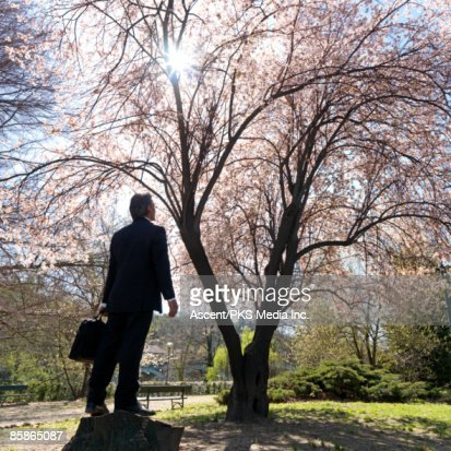 Businessman stands below cherry tree in blossom : Stock Photo