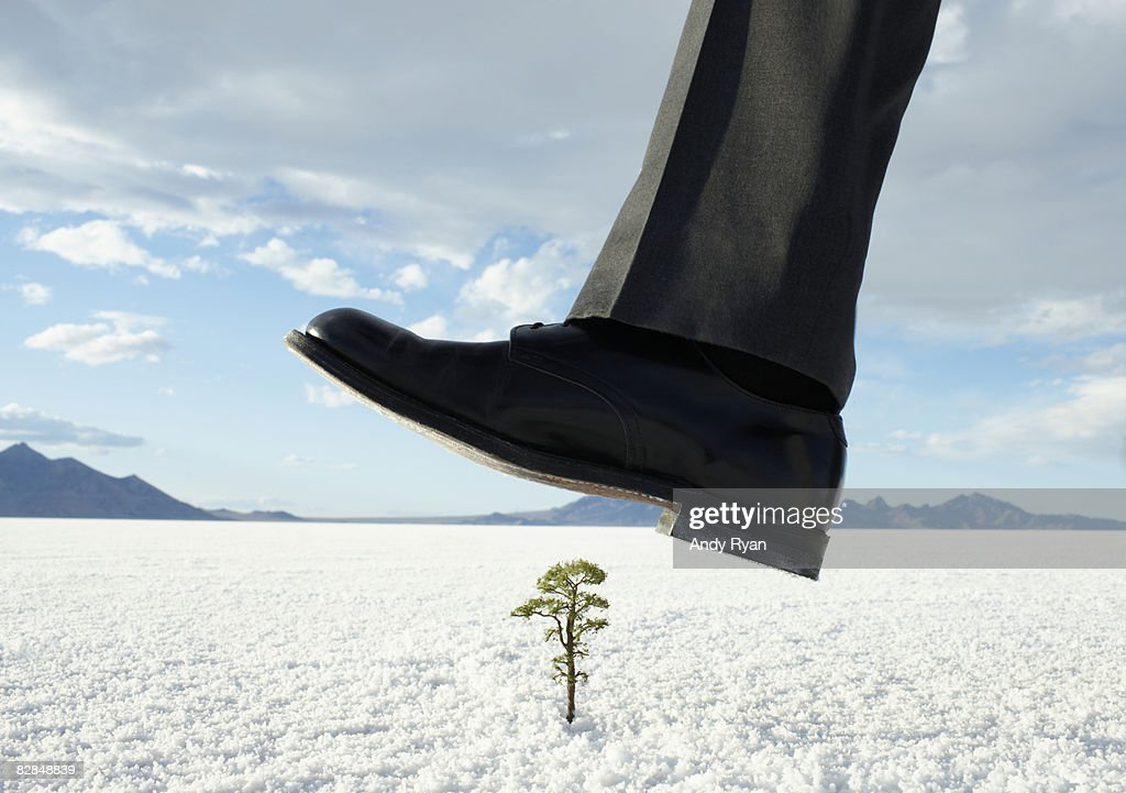 Businessman stepping on small tree : Stock Photo