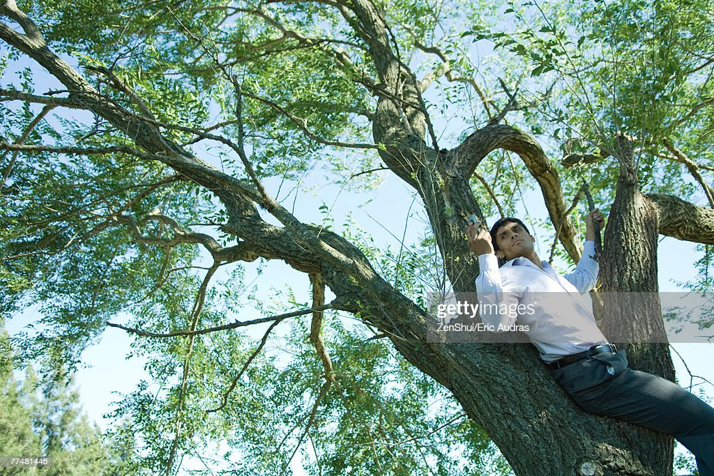 Businessman using cell phone in tree : Stock Photo