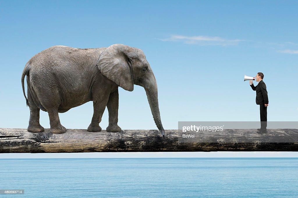 Businessman using speaker yelling at elephant on single wooden b : Stock Photo