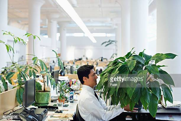 Businessman with Large Houseplant