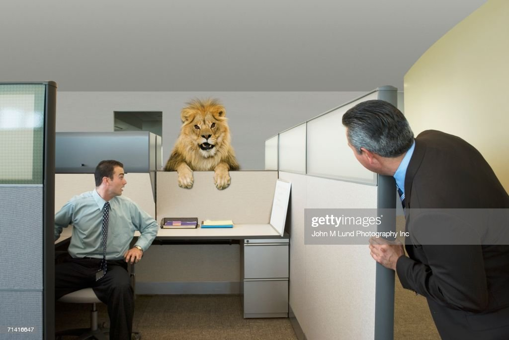 Businessmen looking at lion in office cubicle : Stock Photo