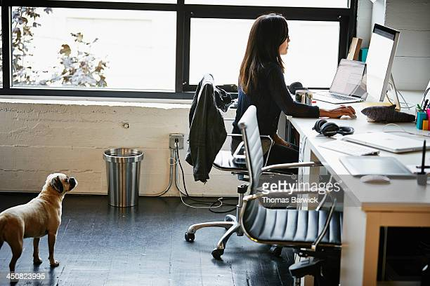 Businesswoman at desk with dog looking up at her