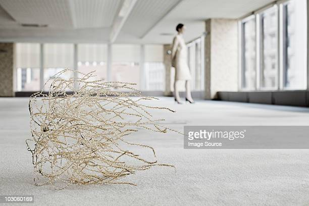 Businesswoman in office with tumbleweed