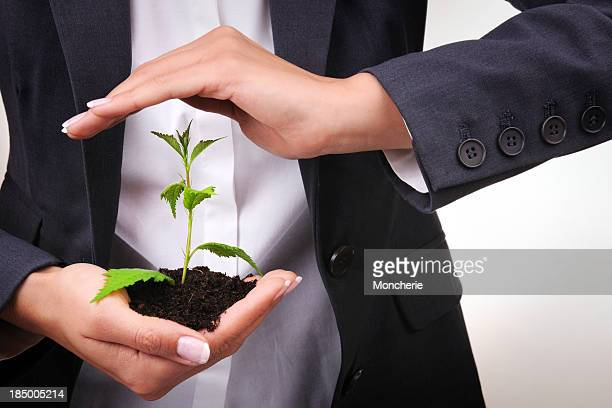 Businesswoman protecting a young plant