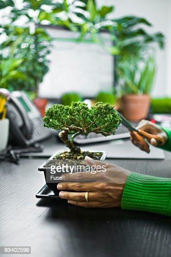 Businesswoman Trimming a Bonsai Plant