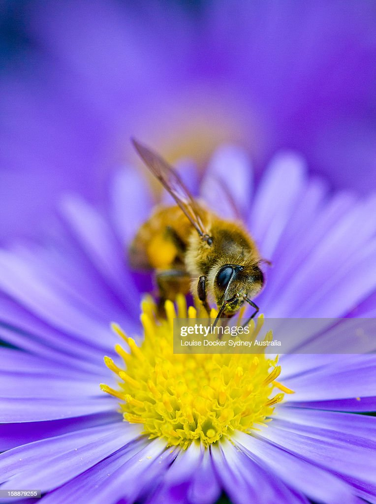 Busy as a bee : Stock Photo