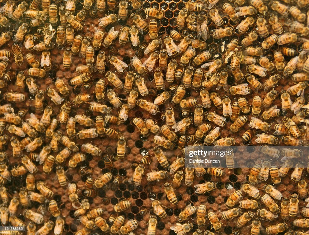 Busy bees : Stock Photo