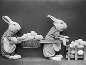 Circa 1930 Two stuffed rabbits in aprons carry a basket of eggs between them