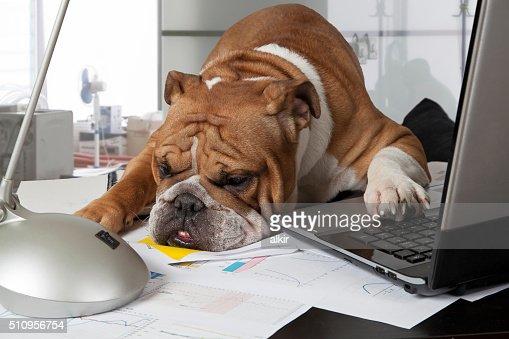 바쁜 하루 사무실 : 스톡 사진