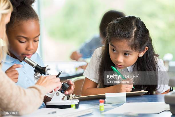 Busy elementary school girls work on science project