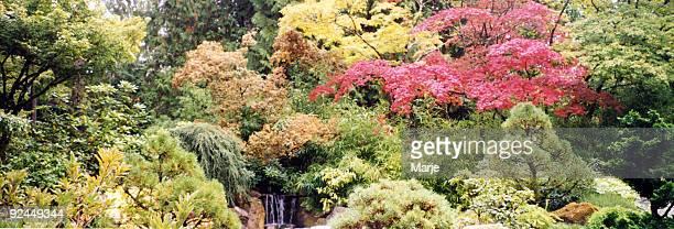 Butchart Gardens 4