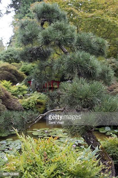 Butchart Gardens Japanese Garden on August 30 2014 in Victoria British Columbia Canada