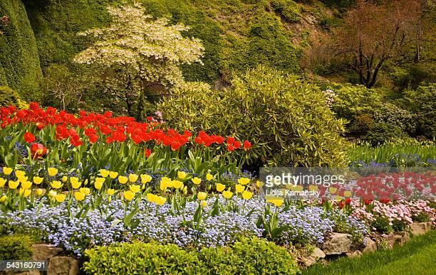 Butchart Gardens Tulips