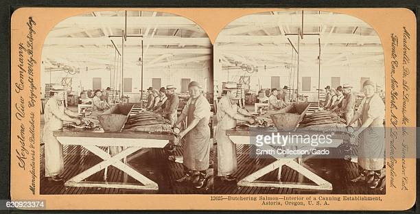 Butchering salmon interior of a canning establishment Astoria Oregon 1900 From the New York Public Library