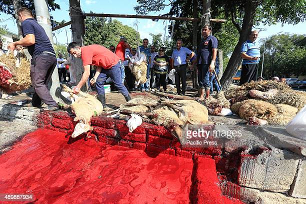 Butchers slaughtered the sacrificial animals for the Eid alAdha Muslims worldwide celebrate Eid AlAdha to commemorate the Prophet Ibrahim's readiness...