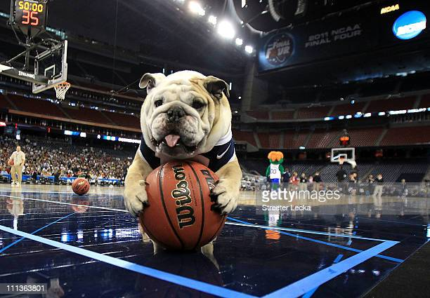 Butler Bulldogs mascot Blue II on the court as Butler practices prior to the 2011 Final Four of the NCAA Division I Men's Basketball Tournament at...