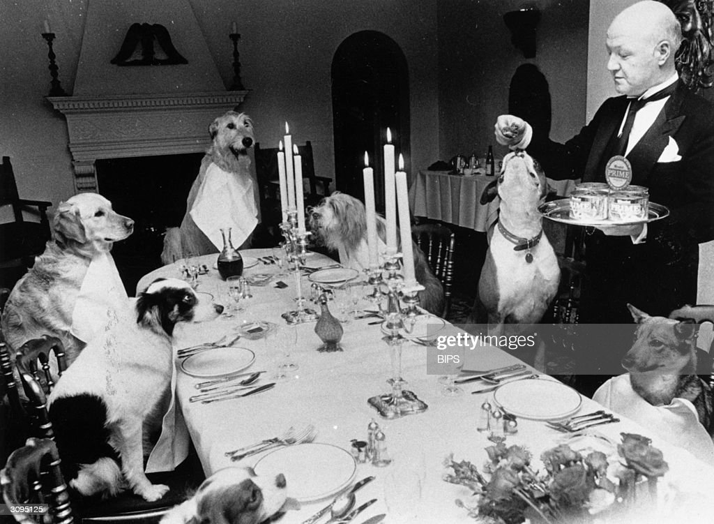 A butler serves a meal to a table of dogs in a Knightsbridge restaurant to mark the launch of a new dog food.