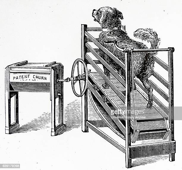 Butter churn powered by on a treadmill From a Dairy Farm 1885