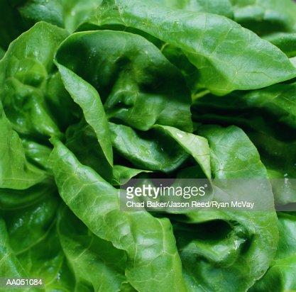 Butter lettuce, close-up : Stockfoto