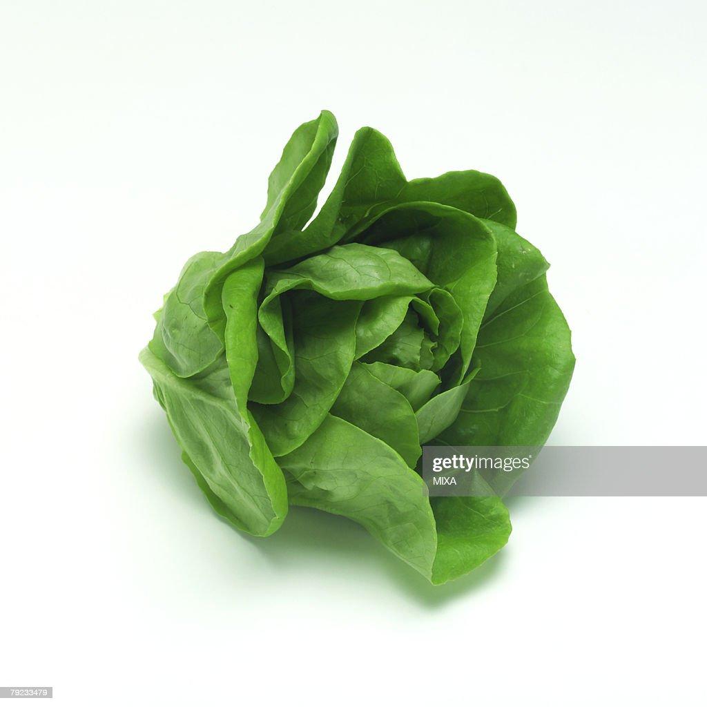 Butter lettuce : Stock Photo