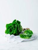 Butter lettuce plant on white tea towel