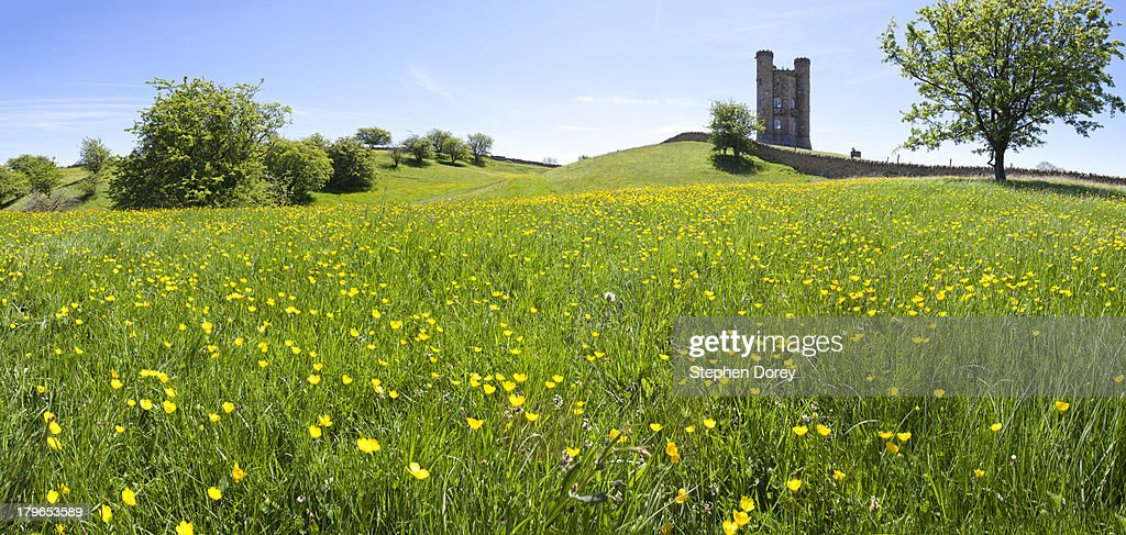 Buttercups on the Cotswolds at Broadway Tower