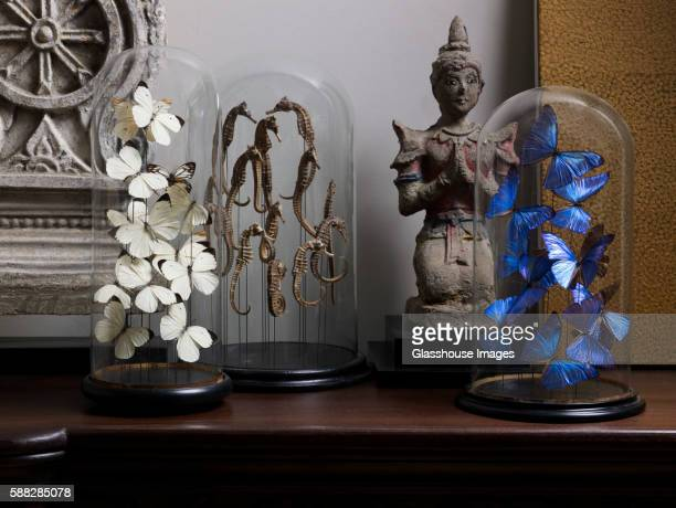 Butterflies and Sea Horses in Glass Domes