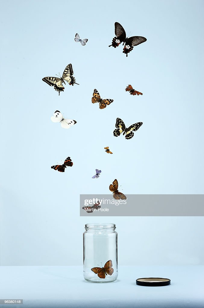 butterflies escaping from jar